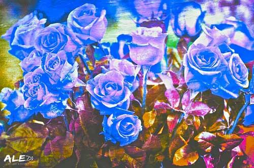 Rose-blu-chiaro