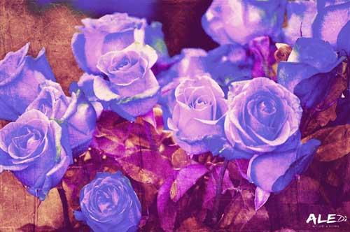 Rose-blu_bianco